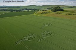 Woodborough Hill, Wiltshire   9th June 2012   Wheat L2