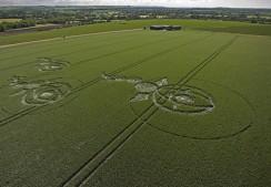 Woodborough Hill, Wiltshire   9th June 2012   Wheat L4