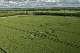Woodborough Hill, Wiltshire   9th June 2012   Wheat L6