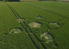 Silbury Hill, Wiltshire   12th June 2012   Wheat L2