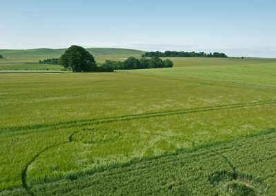 Silbury Hill, Wiltshire | 13th June 2012 | Wheat and Barley L2