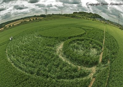 Frome, Somerset | 17th June 2012 | Wheat P