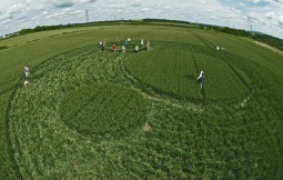Frome, Somerset | 17th June 2012 | Wheat P3