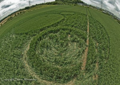 Frome, Somerset | 17th June 2012 | Wheat P4