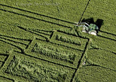 Stanton St Bernard, Wiltshire | 29th June 2012 | Wheat CL
