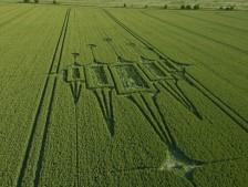 Stanton St Bernard, Wiltshire   29th June 2012   Wheat L2
