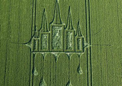 Stanton St Bernard, Wiltshire | 29th June 2012 | Wheat OH