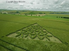 Waden Hill near Avebury, Wiltshire   1st July 2012   Wheat L4