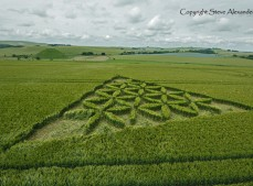 Waden Hill near Avebury, Wiltshire | 1st July 2012 | Wheat L5