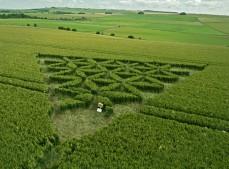 Waden Hill near Avebury, Wiltshire   1st July 2012   Wheat LOW