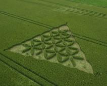 Waden Hill near Avebury, Wiltshire   1st July 2012   Wheat L3