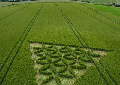 Waden Hill near Avebury, Wiltshire | 1st July 2012 | Wheat L2