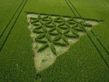 Waden Hill near Avebury, Wiltshire   1st July 2012   Wheat L2