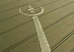 Windmill Hill, Wiltshire   25th July 2012   Wheat L3