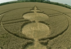 Windmill Hill, Wiltshire | 25th July 2012 | Wheat P