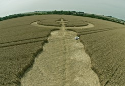 Windmill Hill, Wiltshire | 25th July 2012 | Wheat P5