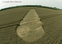 Windmill Hill, Wiltshire | 25th July 2012 | Wheat P6