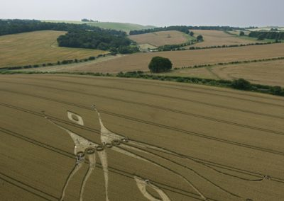 East Kennett, Wiltshire | 26th July 2012 | Wheat L4