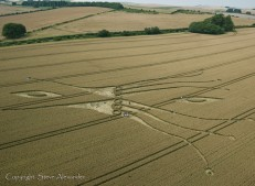East Kennett, Wiltshire | 26th July 2012 | Wheat L5