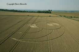 Olivers Castle, Wiltshire   26th July 2012   Wheat L3