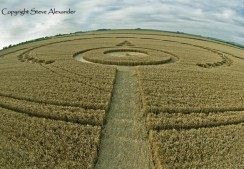 Etchilhampton, Wiltshire | 28th July 2012 | Wheat P