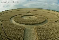 Etchilhampton, Wiltshire | 28th July 2012 | Wheat P2