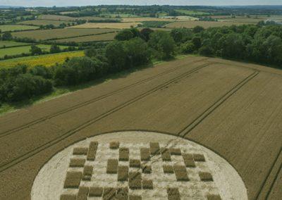 Jubilee Copse near Hannington, Wiltshire | 28th July 2012 | Wheat OH3