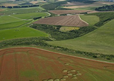 Ogbourne Down, Wiltshire | 29th July 2012 | Linseed L5