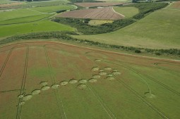 Ogbourne Down, Wiltshire   29th July 2012   Linseed L6