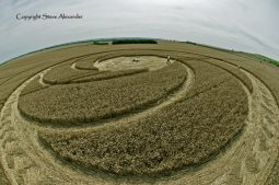 Milk Hill near Stanton St Bernard, Wiltshire   5th August 2012   Wheat P