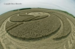 Milk Hill near Stanton St Bernard, Wiltshire | 5th August 2012 | Wheat P2