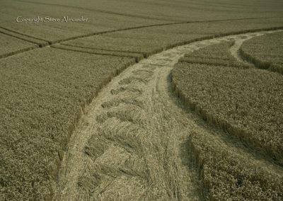 Milk Hill near Stanton St Bernard, Wiltshire | 5th August 2012 | Wheat P5