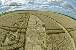 Hackpen Hill, Wiltshire | 26th August 2012 | Wheat P5