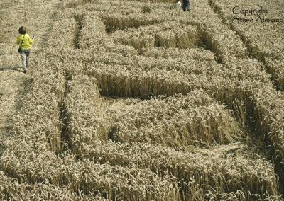 Hackpen Hill, Wiltshire | 26th August 2012 | Wheat P10