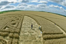 Hackpen Hill, Wiltshire | 26th August 2012 | Wheat PTS