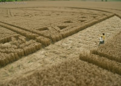 Hackpen Hill, Wiltshire | 26th August 2012 | Wheat PTS2