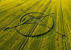 East Field, Alton Barnes, Wiltshire | 2nd June 2013 | Oilseed Rape L