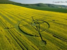 East Field, Alton Barnes, Wiltshire | 2nd June 2013 | Oilseed Rape L2