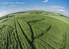 Silbury Hill, Wiltshire | 25th June 2013 | Barley P5