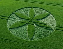 Yatesbury, Wiltshire | 25th June 2013 | Wheat L