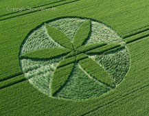 Yatesbury, Wiltshire | 25th June 2013 | Wheat OH