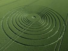 The Ridgeway Avebury, Wiltshire | 6th July 2013 | Wheat L3