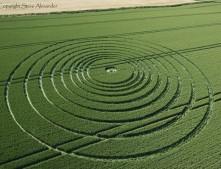 The Ridgeway Avebury, Wiltshire | 6th July 2013 | Wheat OH2