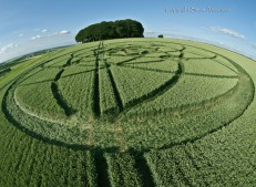 Hackpen Hill, Wiltshire | 15th July 2013 | Wheat P2