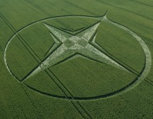Milk Hill, Wiltshire | 1st August 2013 | Wheat L2