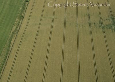 Normanton Down nr Stonehenge, Wiltshire | 1st August 2013 | Wheat L2