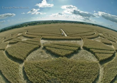 Monument Hill Etchilhampton, Wiltshire | 6th August 2013 | Wheat P4