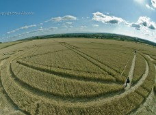 Monument Hill Etchilhampton, Wiltshire | 6th August 2013 | Wheat P5