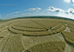 Monument Hill Etchilhampton, Wiltshire | 6th August 2013 | Wheat P6