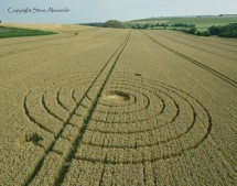 Penning nr Silbury Hill, Wiltshire | 8th August 2013 | Wheat L
